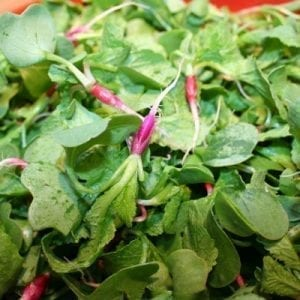 nan-and-pops-baby-radish-leaves
